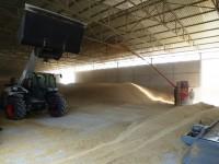 УДП начал обрабатывать зерно